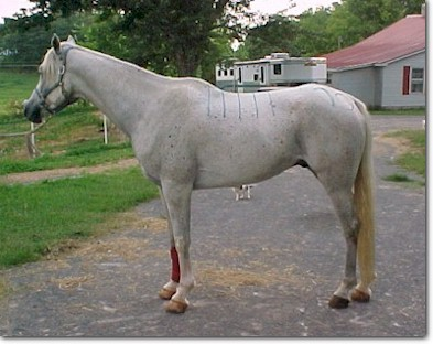Patterned Horse